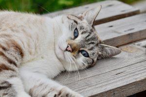 Katze_pixabay
